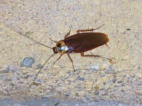 Roach Exterminators | Houston Pest Control