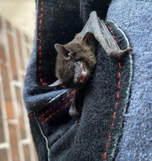 Bat removal | bat exterminator near Houston