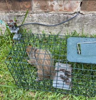 Houston wildlife removal | Squirrel removal
